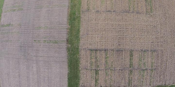 Aerial drone image showing two months of cover crop growth in Monmouth, Illinois in November, 2016. Image:  Dennis Bowman