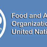 UN Food and Agriculture Organization logo