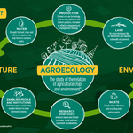 Agroecology is a wonderful aspirational guide, but it cannot replace science.