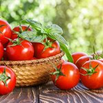 Finally, a great GMO tomato may exist